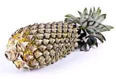 A healthy organic whole spiny pineapple fruit royalty free stock photography