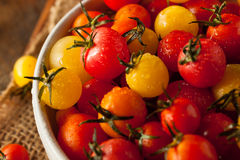 Organic Heirloom Cherry Tomatos Stock Image