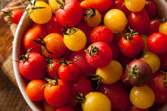 Organic Heirloom Cherry Tomatos Royalty Free Stock Images