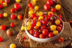 Organic Heirloom Cherry Tomatos Royalty Free Stock Photo