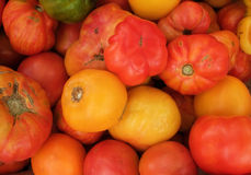 Organic Heirloom Tomatoes stock image