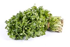 Organic herb coriander leaves bunch royalty free stock images