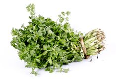 Organic herb coriander leaves bunch stock photo