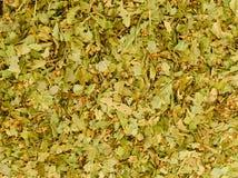 Organic herbs tea Stock Images