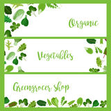 Organic horizontal banners with salad leaves Stock Image