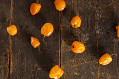 Organic Hot and Spicy Habanero Peppers Stock Images