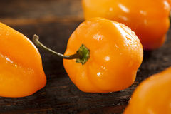 Organic Hot and Spicy Habanero Peppers Royalty Free Stock Images