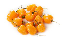 Organic Hot and Spicy Habanero Peppers Stock Photos