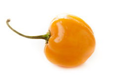 Organic Hot and Spicy Habanero Peppers Royalty Free Stock Image