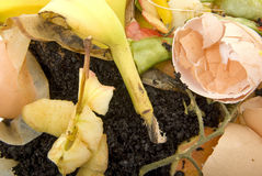 Organic household waste ready to compost. Close up of Organic household waste  waiting to go into garden as compost materials Royalty Free Stock Photo