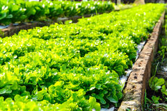 Organic hydroponic farm Royalty Free Stock Images