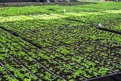 Organic hydroponic ornamental plants cultivation nursery farm. Large modern greenhouse royalty free stock photos