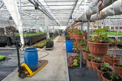 Organic hydroponic ornamental plants cultivation nursery farm. Large modern greenhouse stock images
