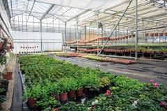 Organic hydroponic ornamental plants cultivation nursery farm. Large modern greenhouse stock image