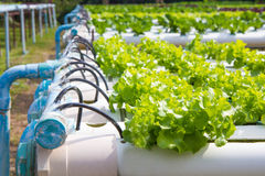 Organic hydroponic vegetable garden Royalty Free Stock Images