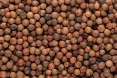 Organic Indian sandalwood (Santalum album) seeds. Royalty Free Stock Photos