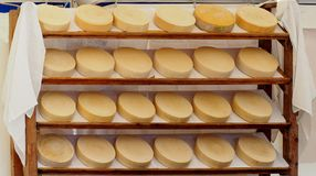 Organic italian cheese wheels on a shelf of a rural market. royalty free stock photography
