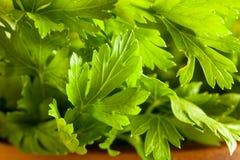 Organic Italian Flat Leaf Parsley Stock Photos