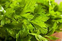 Organic Italian Flat Leaf Parsley Royalty Free Stock Photo