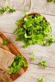 Organic Italian Flat Leaf Parsley Stock Photography