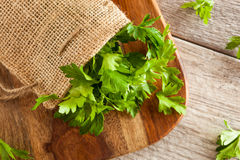 Organic Italian Flat Leaf Parsley Royalty Free Stock Image