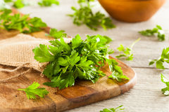Organic Italian Flat Leaf Parsley Royalty Free Stock Photos