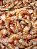 Organic Jumbo Tiger Shrimp on Ice Stock Photo