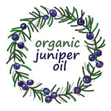 Organic juniper oil drawing wreath vector. Juniper twig wreath color painted for labels, packaging and design color sketch Stock Photos