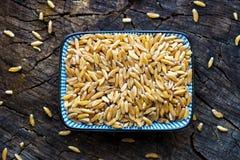 Organic Kamut grain Stock Image
