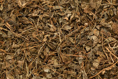 Organic Kasoori Methi (Trigonella Foenum Graecum) leaves. Royalty Free Stock Image