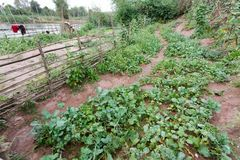 Organic kitchen garden Royalty Free Stock Photography