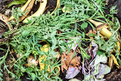 Organic Kitchen Waste Compost Heap. Organic kitchen waste of peelings skins fruit and disposable matter dumped on a compost heap for recycling in the garden Stock Image