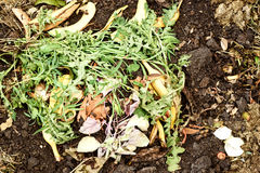 Organic Kitchen Waste Compost Heap. Organic kitchen waste of peelings skins fruit and disposable matter dumped on a compost heap for recycling in the garden Stock Photography