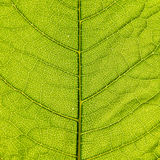 Organic leaf background Stock Image