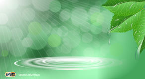 Organic leaves with waterdrops. Dazzling effect background. 3D Realistic Vector illustration Royalty Free Stock Images