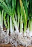 Organic leeks Stock Images