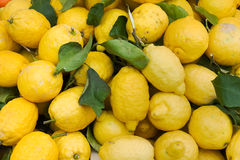 Organic lemons. Heap of yellow lemons at italian market - lemon peel imperfect because grown without treatment Royalty Free Stock Photo
