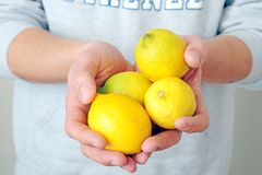 Organic lemons. Man is holding organic lemons in his hands Stock Photography