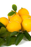 Organic Lemons. From my garden Royalty Free Stock Photos
