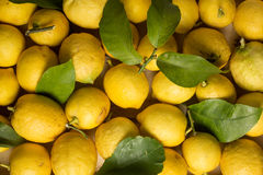 Organic lemons with leaves and stems. Organic lemons with natural imperfections, close up view Stock Photo