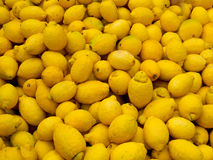 Organic lemons. With natural flaws Royalty Free Stock Photography
