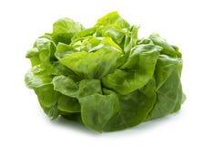 Organic lettuce. Fresh organic lettuce  on white background Stock Photos
