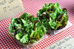 Organic lettuce blends displayed at farmers market Stock Photo