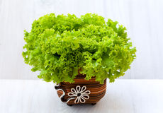 Organic lettuce. Green fresh lettuce in decorated vase Royalty Free Stock Images