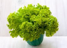 Organic lettuce. Green iceberg lettuce in the bowl Royalty Free Stock Images
