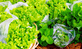 Organic Lettuce and Mint Stock Image