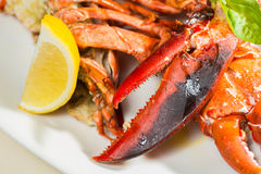 Organic lobster on dish with lemon slices Royalty Free Stock Images