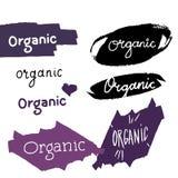 Organic logo calligraphy Stock Images