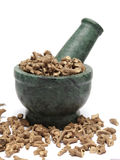Organic Long pepper Dried roots (Piper longum) on marble pestle Stock Images