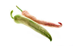 Organic Macedonian Fringed hot chili peppers with green stem. Royalty Free Stock Images